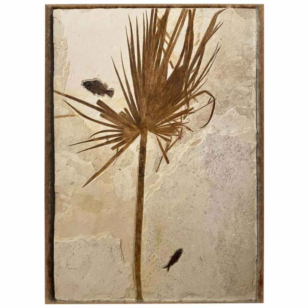 frida palm and fish fossil