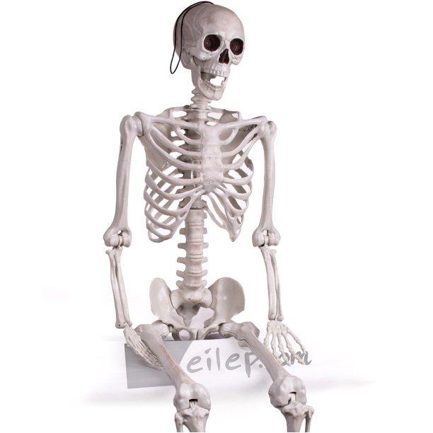 "Forum Novelties 60"" Posable Skeleton Halloween Decoration"