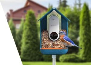 bird buddy smart bird feeder, bird feeder cameras
