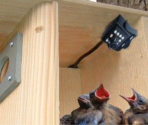 Birdhouse spy cam, bird feeder cameras