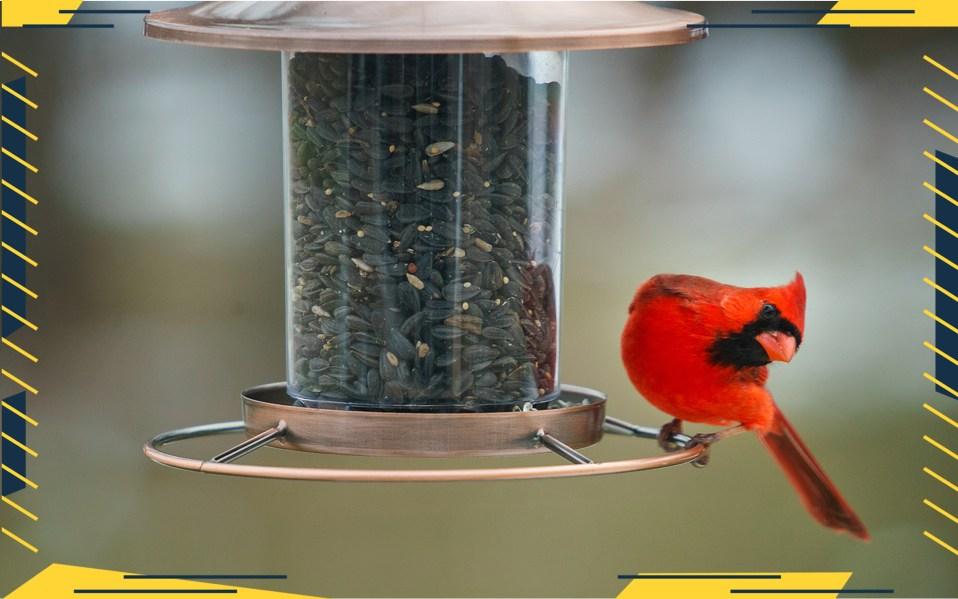 bird feeder cameras